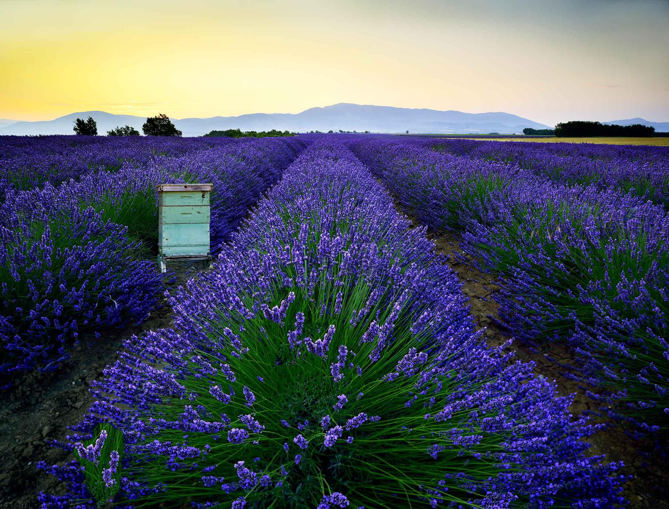 Pays de Sault et Nougat de Provence d'André Boyer